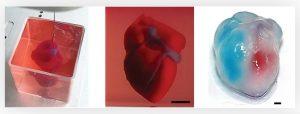 چاپ سه بعدی قلب انسان